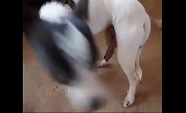 Sexo de animais entre cachorro e gato caiu na net